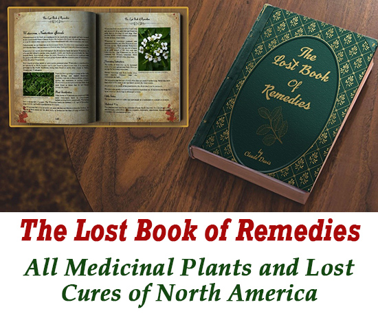 Click Here to Check Out Medicinal Plants from The Lost Book Of Remedies!